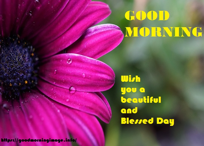 Good Morning Rainy Day Images HD